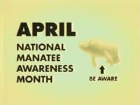 Manatee Awareness Month
