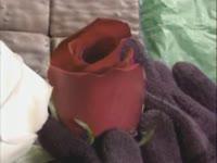 Fusing Roses