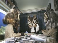Owls: Reviewing Photos