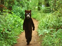 Bear Costume Attack