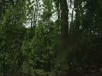 Morphing: Falling Tree