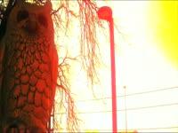 Owl Statue on Sunset