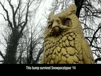 Snowpocalypse '14 Bump: Gold Owl