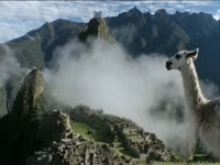 Tagged Videos: Llama at Machu Picchu