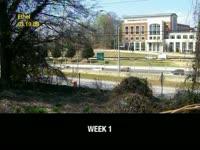 Kudzu Update Week 11