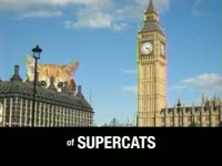 Supercats in England