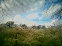 Spring is Winning