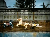 Free Pony Rides