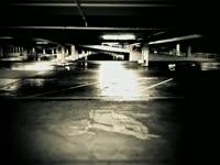 Owl Parking Lot