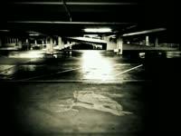Owl in Parking Lot v2