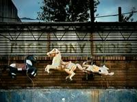 Free Pony Rides v2