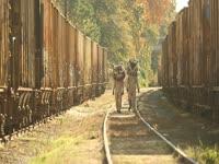 Owls: Railroad Walk