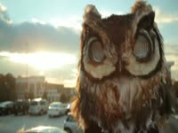 Owls: Parking Lot Stare