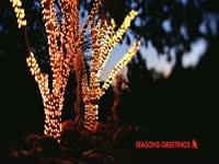 Seasons Greetings Lit Trees