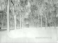 Seasons Greetings Forest