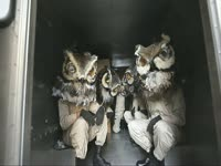 Owls: In a Truck