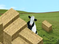 Cow on Hay Bales