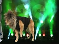 Animals: Dog Shakes Off Wig