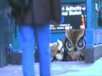 Owls:  Downtown