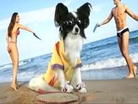 Animals: Beach Dog