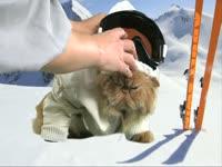 Animals: Ski Cat