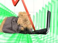 Animals: Stocks Cat