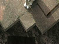 Animals: Kitty Hell