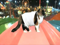 Animals: Cat on Slide