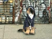 Animals: Gangsta Cat