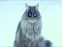 Meow Meow: CH Clown Face