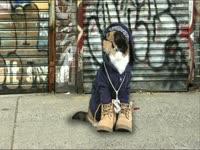 Meow Meow: Gangsta Cat
