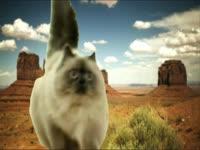 Meow Meow: Western Kitty