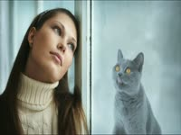 Meow Meow: Window Lick