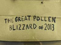Great Pollen Blizzard of 2013