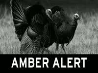Turkey Amber Alert
