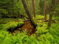 Tagged Videos: Temperate Rainforest