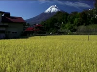 Tagged Videos: Rice Field below Mount Fuji