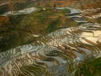 Tagged Videos: Terraced Rice Field