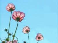 Flower Schedule